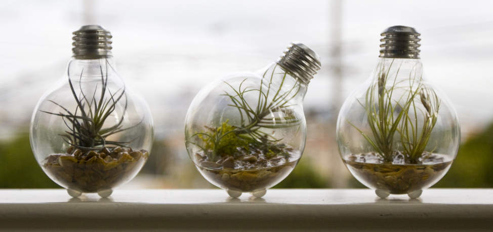 DIY projects made with old light bulbs